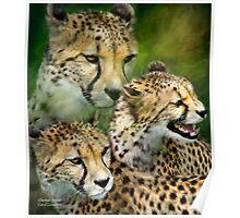 Cheetah Moods Poster