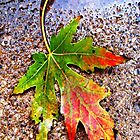 Autumn Leaf by CanoeComsArt
