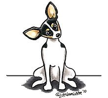Rat Terrier Sit Pretty Photographic Print
