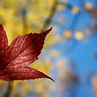 Manitoba Maple Leaf I by EelhsaM