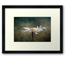 Ox Eye Daisy on texture Framed Print