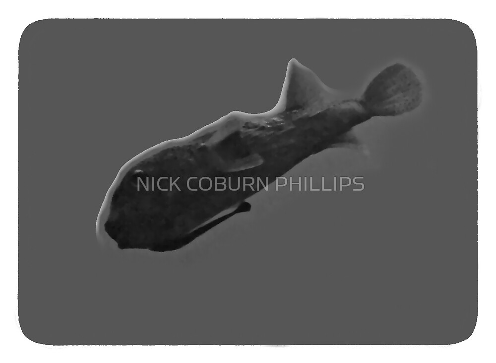 HYDROPUFFER by NICK COBURN PHILLIPS