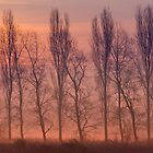 Beyond the Dawn by John Dunbar