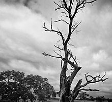 The dead tree that lives by Lee Hopkins