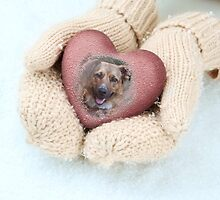 Dog in Mittens 01 by Peter Barrett