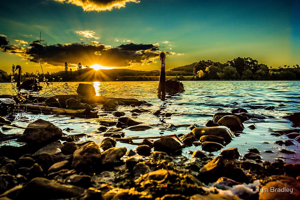 Swans At  Sunset Canberra Australia  by Kym Bradley