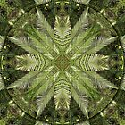 Forest Fern Mandala by haymelter