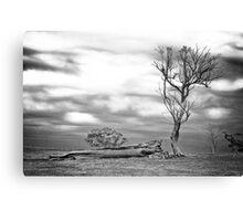 Fallen tree (black & white) Canvas Print