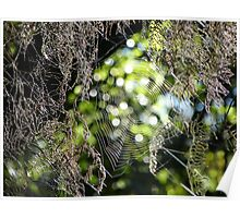 Cobwebs in the moss Poster