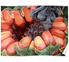 Cycad Palm Australia Poster