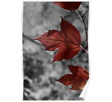 Red Maple Leaf II Poster