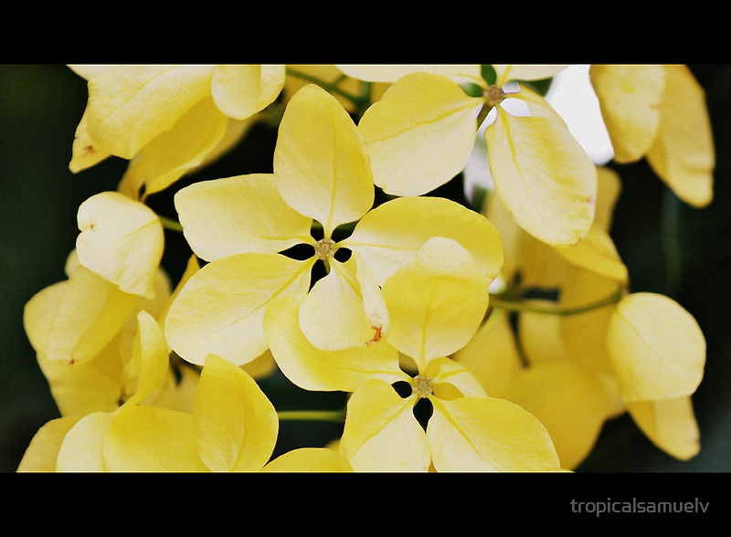 Summer Yellow by tropicalsamuelv
