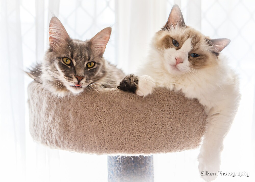 Cat Companions by Silken Photography