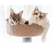 Cat Companions Photographic Print