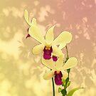 Purple Exotic with Shadows by Leonie Mac Lean