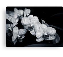 Orchids in Monochrome Canvas Print