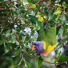 Cheeky Rainbow Lorikeet by Peta Thames