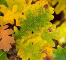 Gambel Oak Sticker