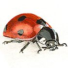 Ladybug by thedrawingroom