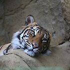 Female Tiger by Sheila Smith