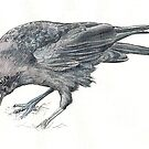 Carrion Crow by thedrawingroom