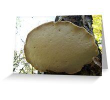 Pancake Mushroom Greeting Card