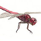 Pink Dragonfly by thedrawingroom
