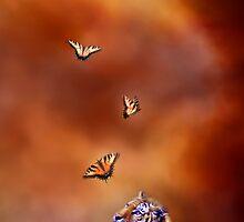Six Wild Tigers by Carol  Cavalaris