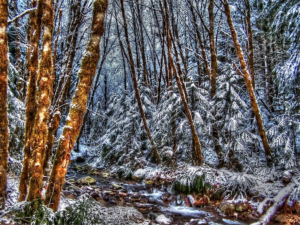 Fresh Beauty by Charles & Patricia   Harkins ~ Picture Oregon