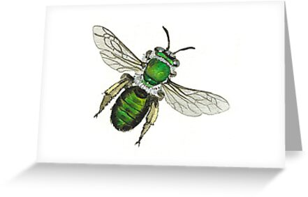 Green Burrowing Bee by thedrawingroom