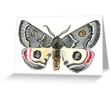 Dryandra Moth Greeting Card