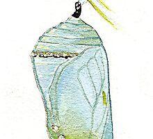 Monarch Butterfly pupa by thedrawingroom