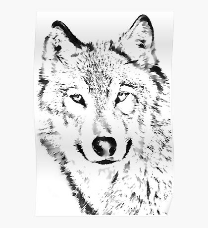 Grey Wolf (Canis lupus) Poster