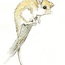 Pygmy Possum by thedrawingroom