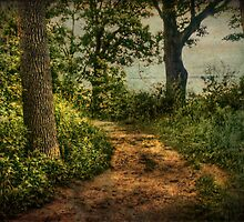 Path by the Lake by Susan  Kimball