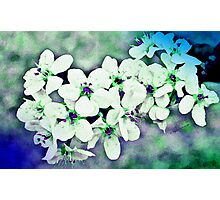 Brad Blooms - Watercolor Photographic Print