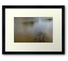 Branch in Water Framed Print