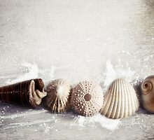 Sea shells by the sea shore by Sybille Sterk