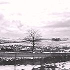 Lancashire - A View  by Carl Gaynor