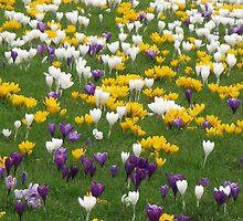 Flowers, Flowers, Flowers by Stephen Willmer
