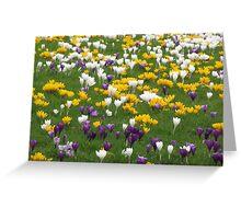 Flowers, Flowers, Flowers Greeting Card