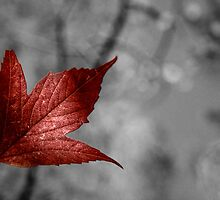 Red Maple Leaf I by Ashlee White
