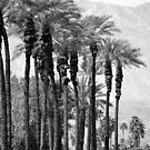 Desert Life by Michael J Armijo