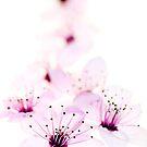 Cascading Cherries by Rebecca Cozart