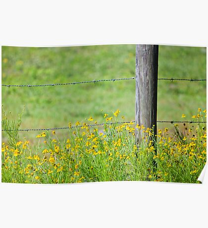 Wildflowers and Barbed Wire Fence Poster
