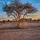 tree by Jerry Dorado Alcantara