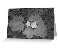 two tone leaf Greeting Card