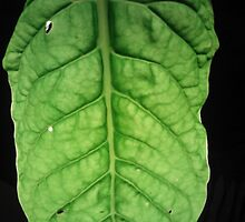 Bright Leaf by Miguel1995