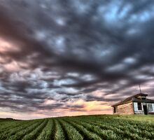 sunset and durum wheat crop storm clouds by pictureguy