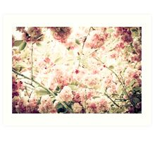Kwanzan Cherry Tree Blossom Art Print